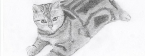 Sketch – Cat lying down