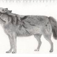 Sketch – Wolf standing